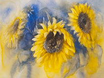 Sunflowers on blue background. A watercolor drawing of three bright golden sunflowers with green leaves, on blue background, vintage style botanical art Stock Photos