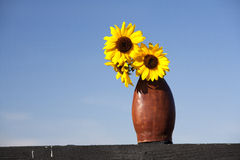 Sunflowers and a blue sky. Stock Photo