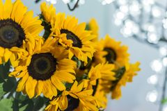 Sunflowers with blurred  neon background on the party night stock image