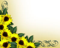 Sunflowers border yellow Spring stock image