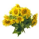 Sunflowers bouquet stock photo
