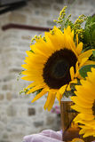 Sunflowers bouquet  against a brick wall Stock Images