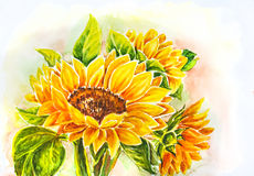 Sunflowers. Sunflowers in bouquet. Watercolor painting Royalty Free Stock Images