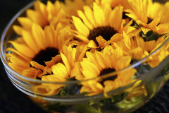 Sunflowers in bowl. Close up of a bowl of beautiful yellow sunflowers Royalty Free Stock Photography
