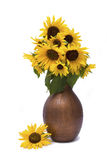 Sunflowers in brown vase. Isolated on white background Stock Photography