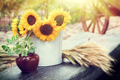 Sunflowers in bucket, ears of wheat and pot with plant on table. Royalty Free Stock Photos