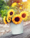 Sunflowers in bucket outdoors. Rustic still life. Royalty Free Stock Photo