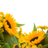 Sunflowers and calendula flowers Stock Photos