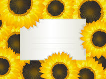 Sunflowers card Royalty Free Stock Photography