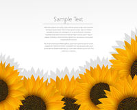 Sunflowers card. Illustration of a empty invitation card over a sunflower bed Royalty Free Stock Photo