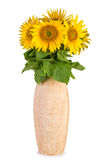 Sunflowers in ceramic vase Stock Image