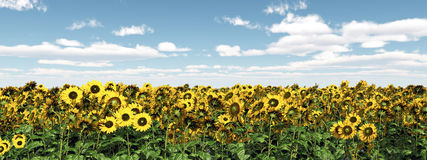 Sunflowers. Computer generated 3D illustration with a field of sunflowers Royalty Free Stock Photo