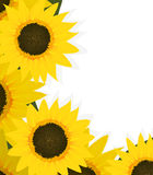 Sunflowers corner Royalty Free Stock Photography