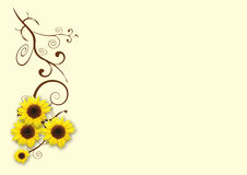 Sunflowers cream background Royalty Free Stock Photos