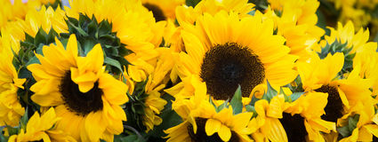 Sunflowers. Cut sunflowers for bouquets at a farmer's market Royalty Free Stock Images