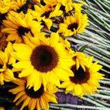 sunflowers cutflowers yellow yellowflowers summerflowers royalty free stock photo