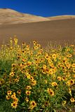 Sunflowers and Dunes vertical Royalty Free Stock Images