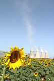 Sunflowers and factory Royalty Free Stock Photography