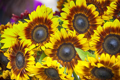 Sunflowers at the farmer market Royalty Free Stock Images