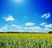 Sunflowers field Royalty Free Stock Photos