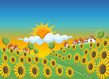 Sunflowers field. Sunset over beautiful sunflowers field on green hill with houses Stock Photography
