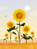 Sunflowers field. Cute illustration of sunflowers field Stock Photo