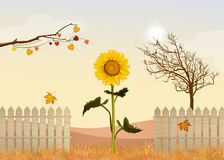 Sunflowers field. Illustration of sunflowers field in autumn Stock Images
