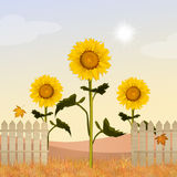 Sunflowers field. Illustration of yellow sunflowers field Stock Photos