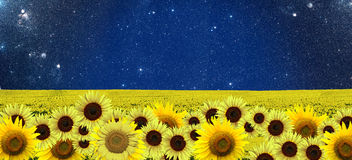 Sunflowers field at night. With a sky full of stars Royalty Free Stock Images