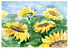 Sunflowers on the field. Watercolor. Sunflowers on the field. Yellow flowers, green leaves on blue sky background. Watercolor Royalty Free Stock Photography