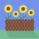 Sunflowers flat design Stock Photos