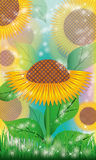 Sunflowers floral background Stock Photography