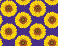 Sunflowers. Floral seamless pattern background Royalty Free Stock Image