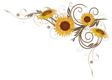 Sunflowers, floral Royalty Free Stock Image