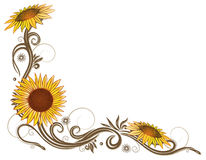 Sunflowers, flower, floral Stock Photos