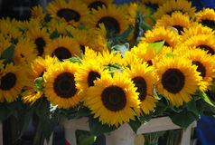 Sunflowers at the flowers market in Wroclaw, Poland Stock Photography