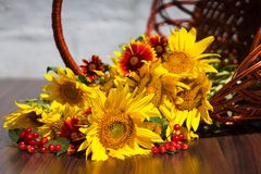 Sunflowers with flowers and Viburnum lies in a basket Stock Images