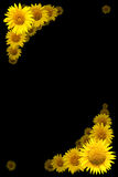 Sunflowers frame Royalty Free Stock Photo
