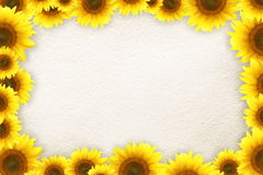 Sunflowers frame Stock Photos