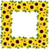 Sunflowers frame.  Royalty Free Stock Image