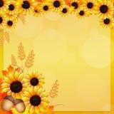 Sunflowers frame Stock Photo