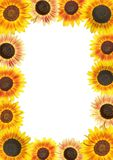 Sunflowers. Frame with sunflowers and copy space Royalty Free Stock Photography
