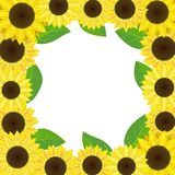 Sunflowers. Frame with sunflowers - vector illustration Royalty Free Stock Image
