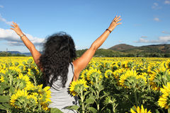 In the sunflowers Stock Photography
