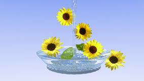 Sunflowers in a glass bowl with water. With light blue gradient as a background stock illustration