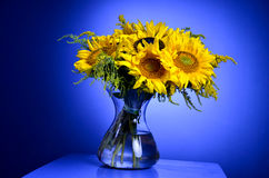 Sunflowers in glass transparent vase Stock Images
