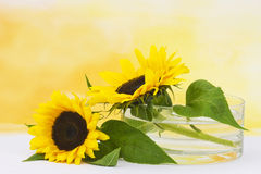 Sunflowers in glass vase Royalty Free Stock Photography