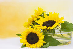 Sunflowers in glass vase Royalty Free Stock Photos