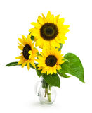 Sunflowers in a glass vase. Isolated on white Stock Photos