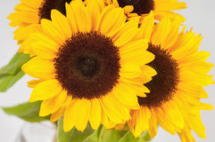 Sunflowers in a glass vase Stock Photo